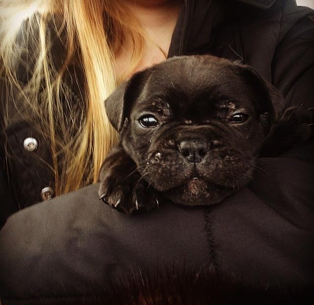Срочно продается щенок!