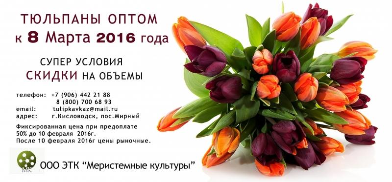 Заказать цветы на 8 марта оптом заказаз цветов москва