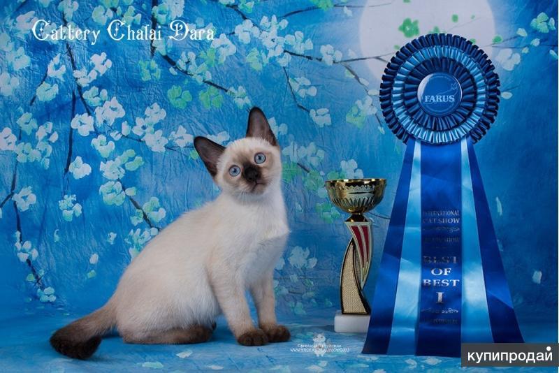 Тайские котята из WCF питомника Chalai Dara