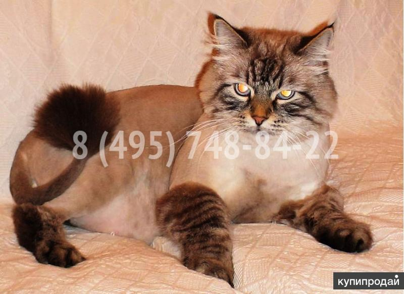 Стрижка кошек,  котов и котят (любая сложность,  БЕЗ НАРКОЗА! ) .