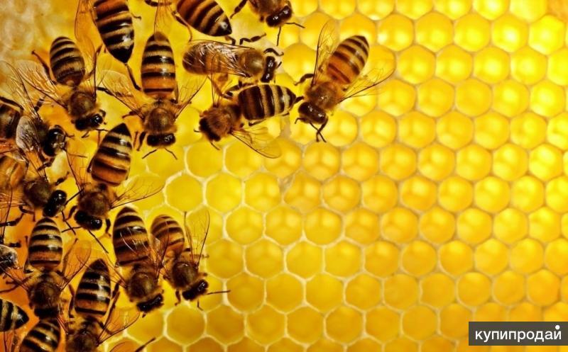 Мёд цветочный натуральный