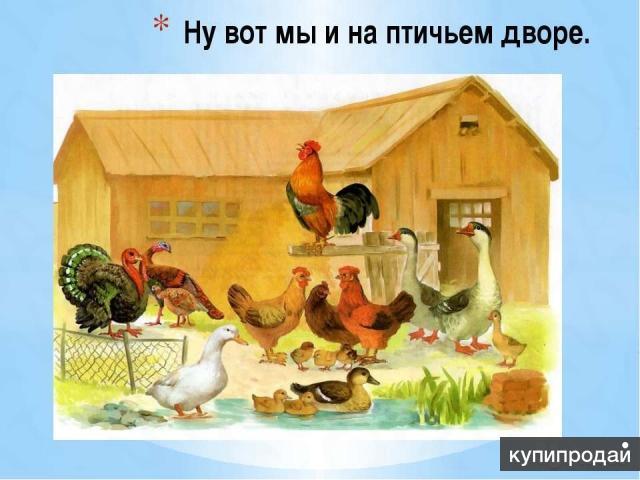 Реализация живой с/х птицы: Куры,утки,гуси,муларды