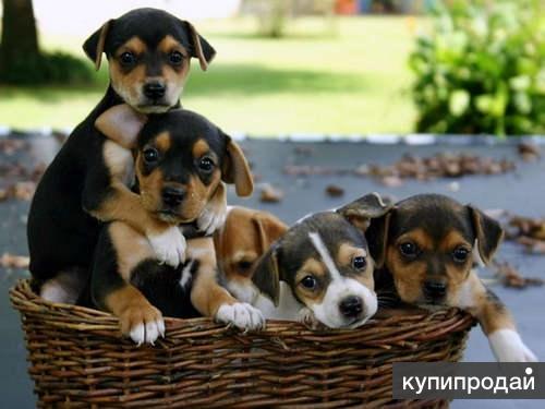 Животные в доме. Защита их здоровья и потомства.