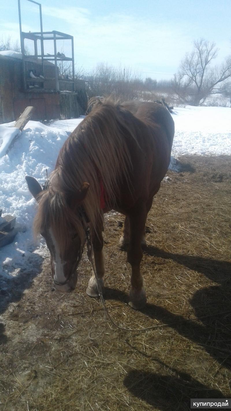 Продаётся лошадь.