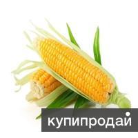 кукуруза 3,4 класса