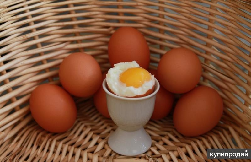 Предлагаем яйцо куриное столовое и диетическое