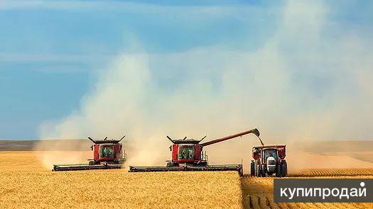 Продаем пшеницу, кукурузу, ячмень, овес.