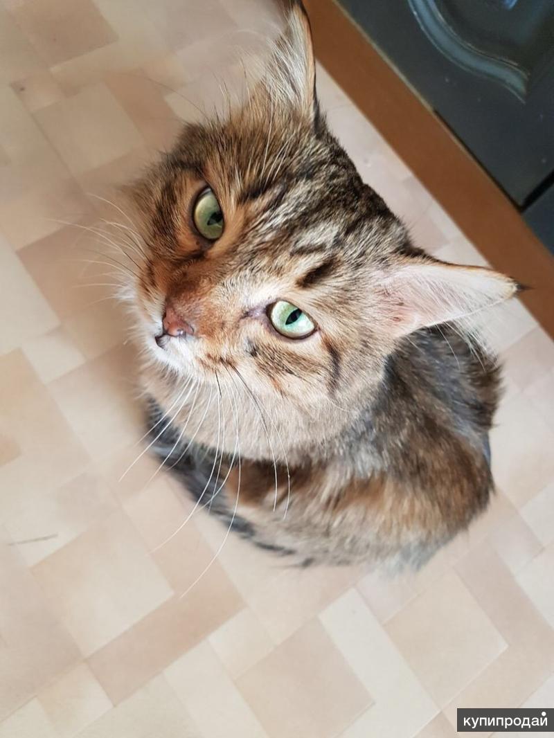 Настрадавшийся котик Кузя ищет дом
