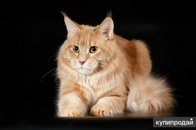Котята с документами