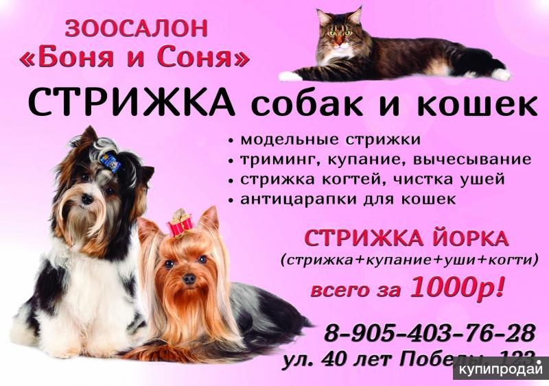 Всё о стрижках собак и кошек
