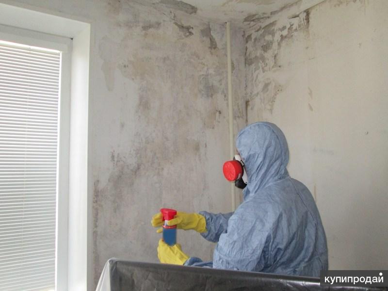 Как в домашних условиях убрать плесень 269
