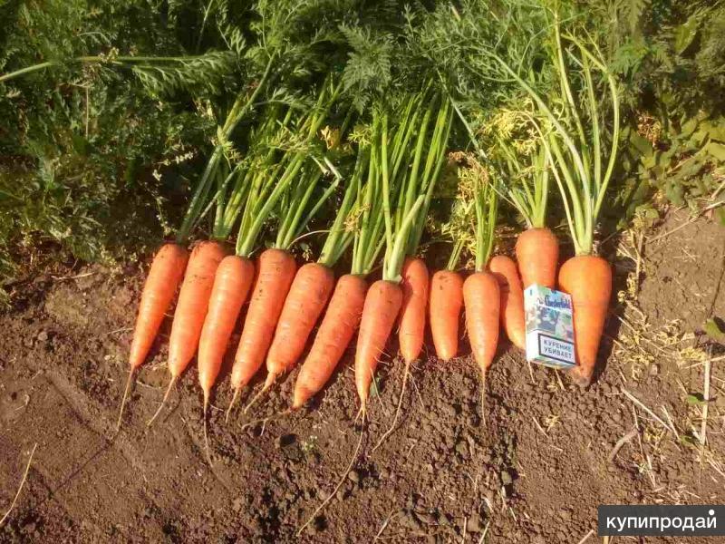 Морковь молодая Крымская
