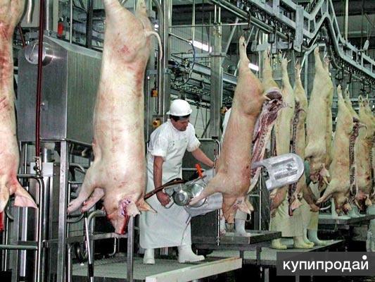 Убой свиней и крс. Оборудование для цехов