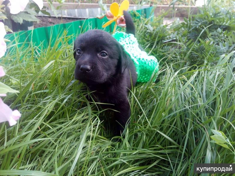 но ситуация такая,гуляли со своей собакой и он нашёл 6 маленьких и очень милых щенков,не смогли пройти