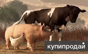 Оптово-розничный склад комбикормов в Белгороде