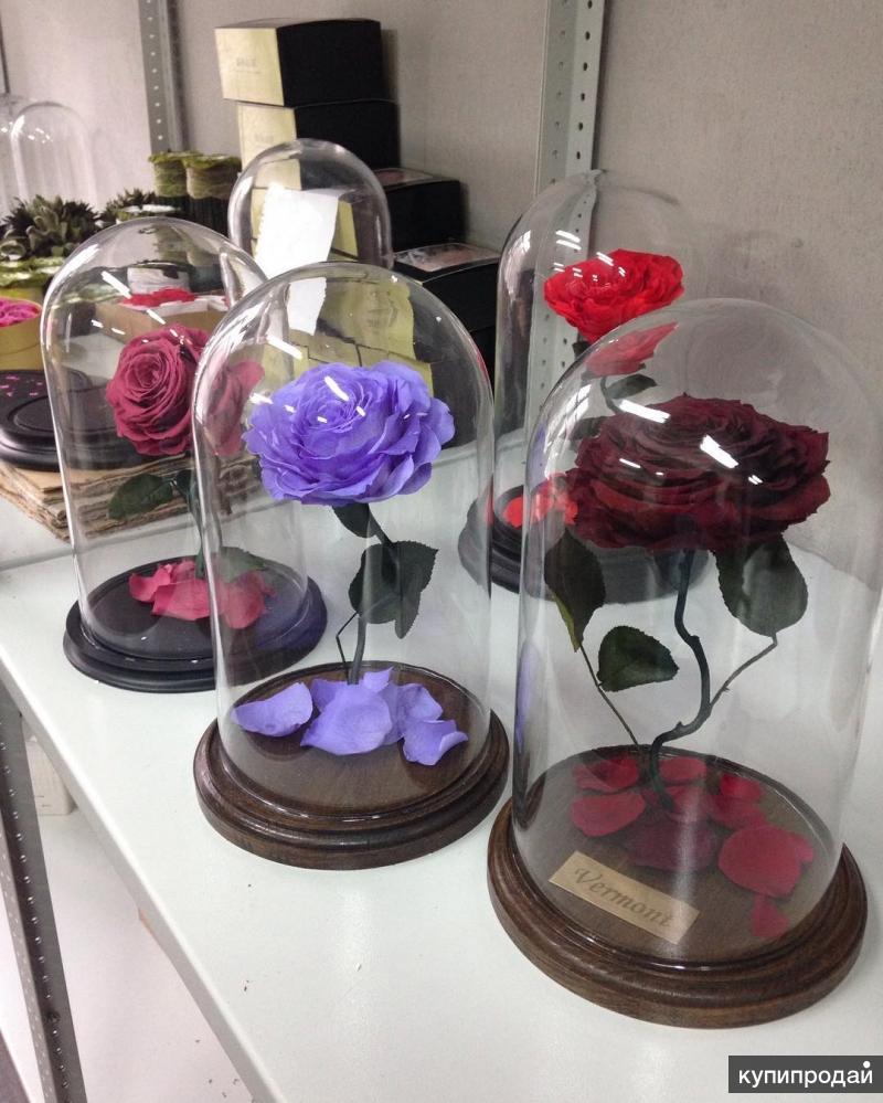 Живые цветы в колбе своими руками