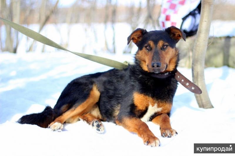Прекрасная нежная Яшма - некрупная яркая собачка