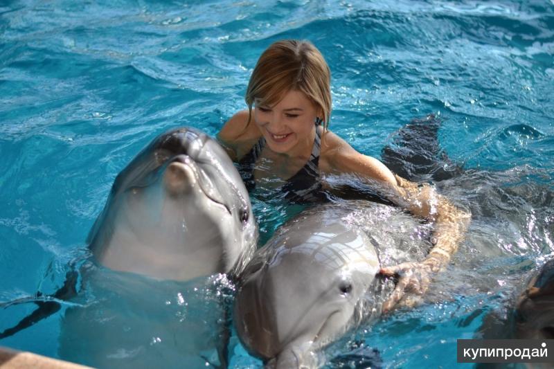 Плавание с дельфинами подарок