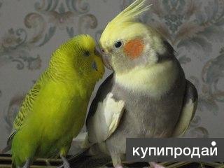 Попугаи много разных