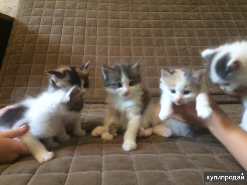 Котята от кошки-потеряшки ищут добрых хозяев