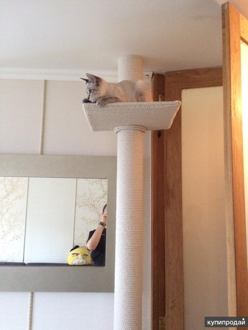 Пошаговая инструкция по изготовлению когтеточки Когтеточка напольная для кошек своими руками