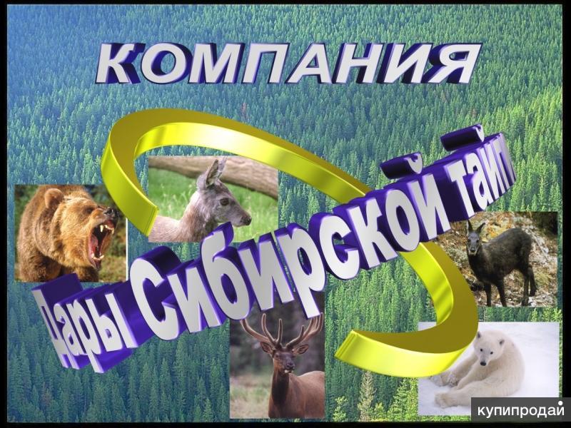 Покупаем рога оленя, лося!!!