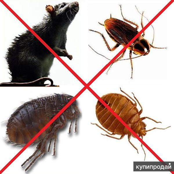 Уничтожение клопов, тараканов, муравьев, блох.