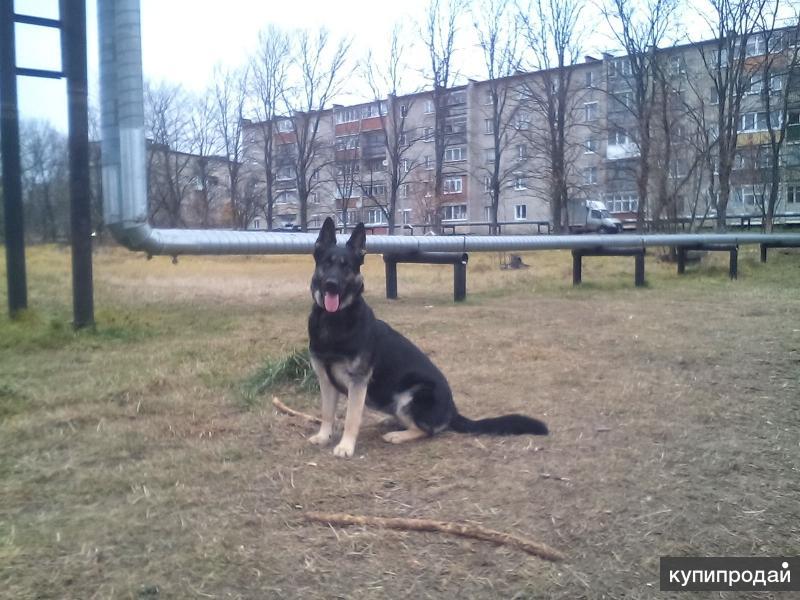 Собаки которые охраняли границы СССР