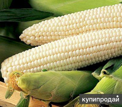 Белая кукуруза крупа, мука, зерно. Производитель
