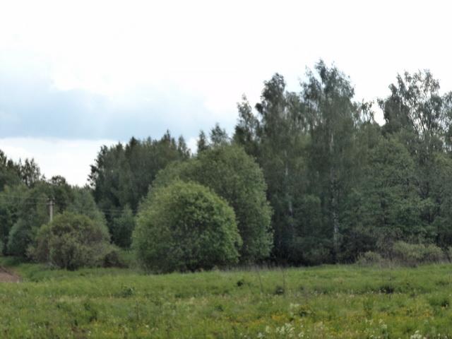 Земельный участок 16 соток с домом под прописку(снос) в Переславском районе