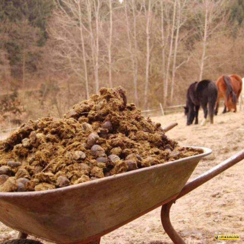 приворожить старый склад ядохимикатов можно ли держать животных кадастровые работы