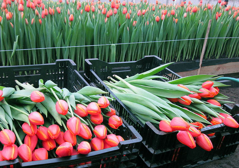 заявку тюльпаны оптом и в розницу купить в спб потерпевшего уголовному