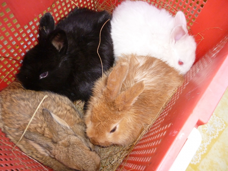 Продам кроликов мясной породы