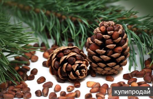 Оптовая продажа кедрового ореха