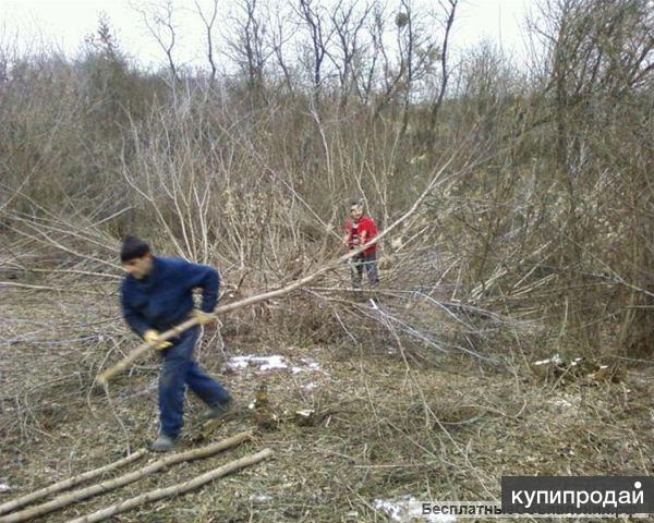 Расчистка участков,спил деревьев.