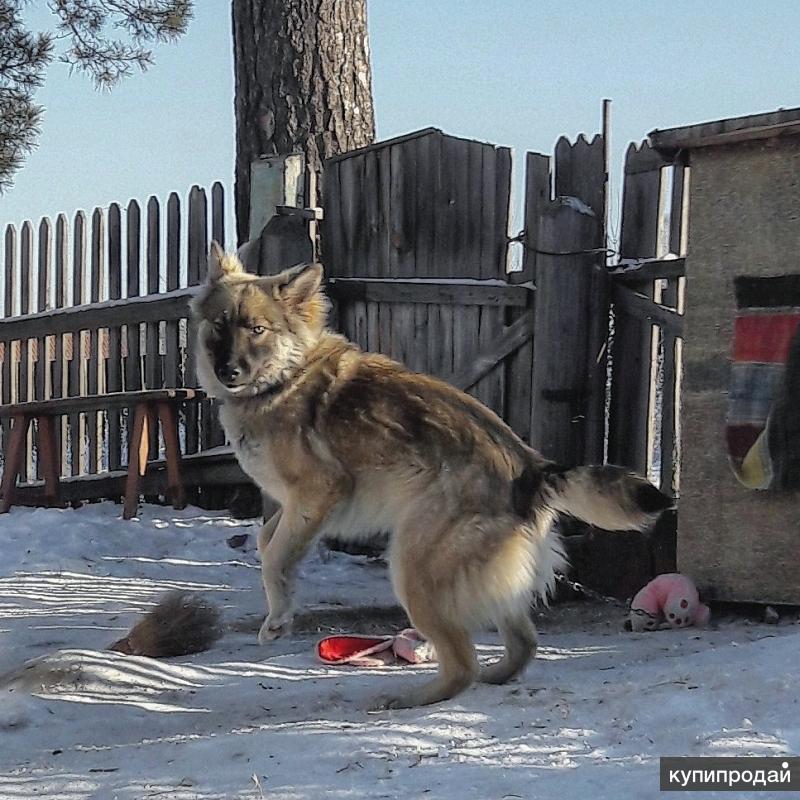 Потерялась собака в п.Лесной