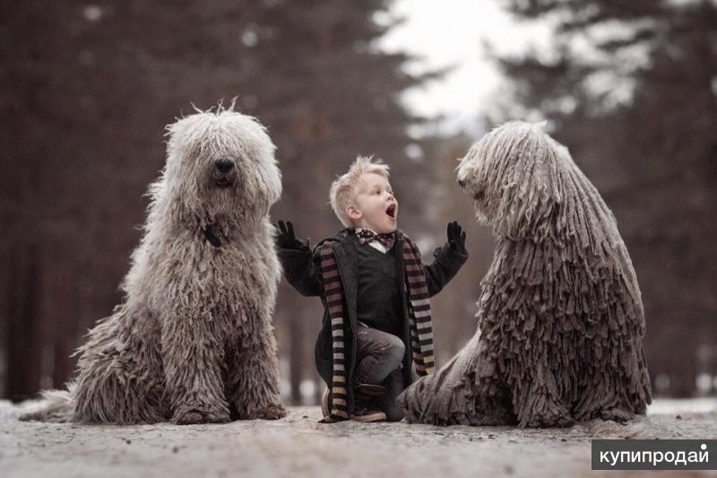 Дрессировка собак в Набережных Челнах