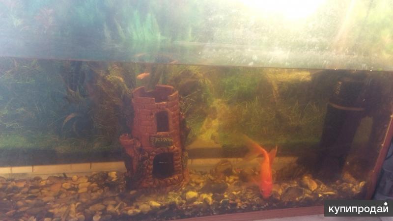 Дёшево продаётся аквариум на 80 л( с фильтром,замком и рыбками)