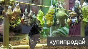 Высоко рентабельный  бизнес ферма Живых Экзотических Бабочек  из Чили