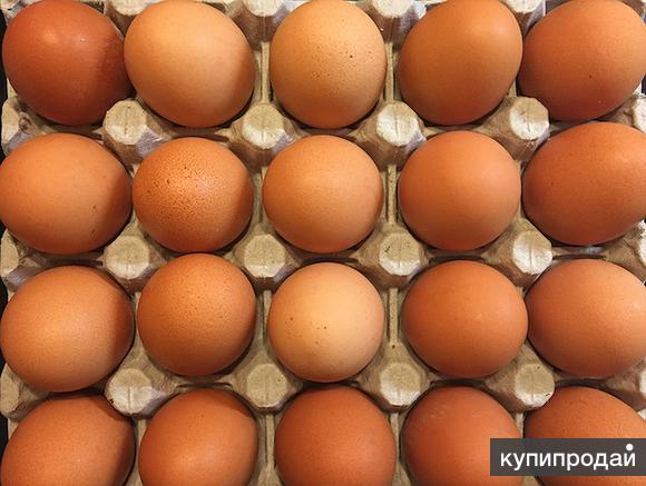 Продаем куриное яйцо оптом от производителя в Воронеже.