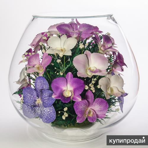 Цветы в вакууме, орхидеи фиолетовых оттенков