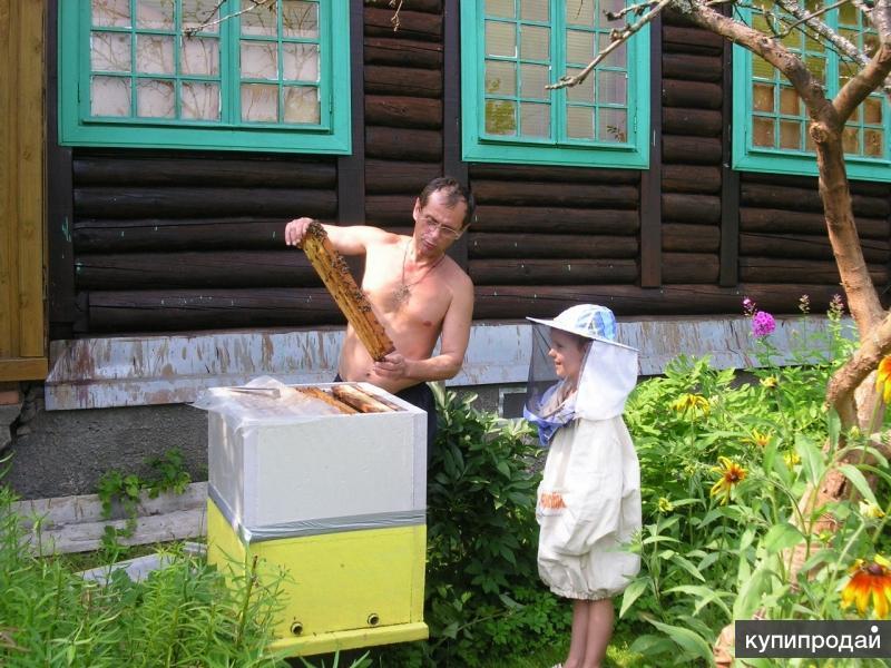 Пчелы для пчелоужаливания