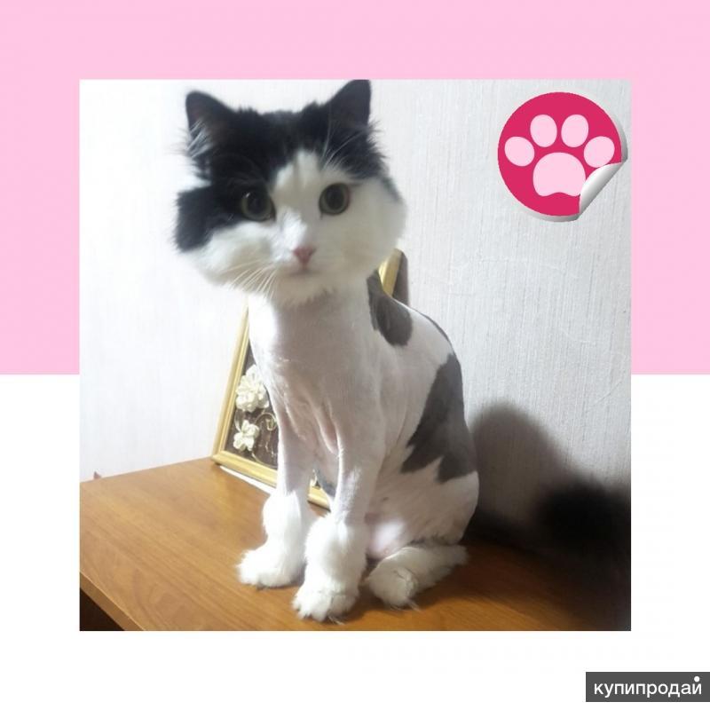 стрижка кошек в Кемерово с выездом на дом.