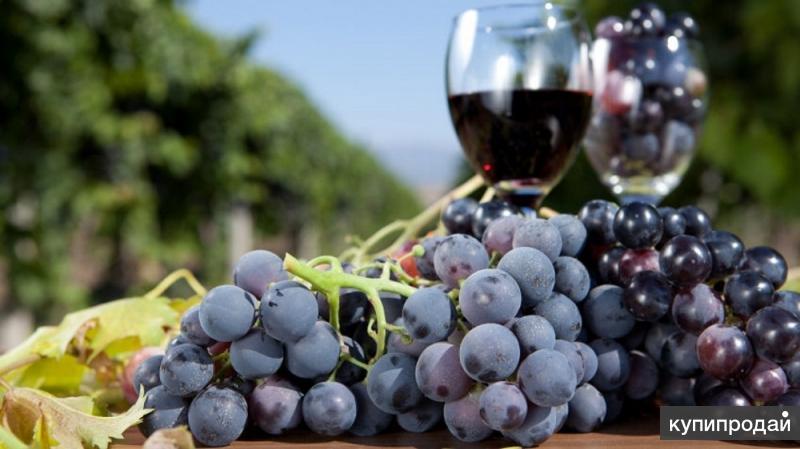 Домашнее вино и чача
