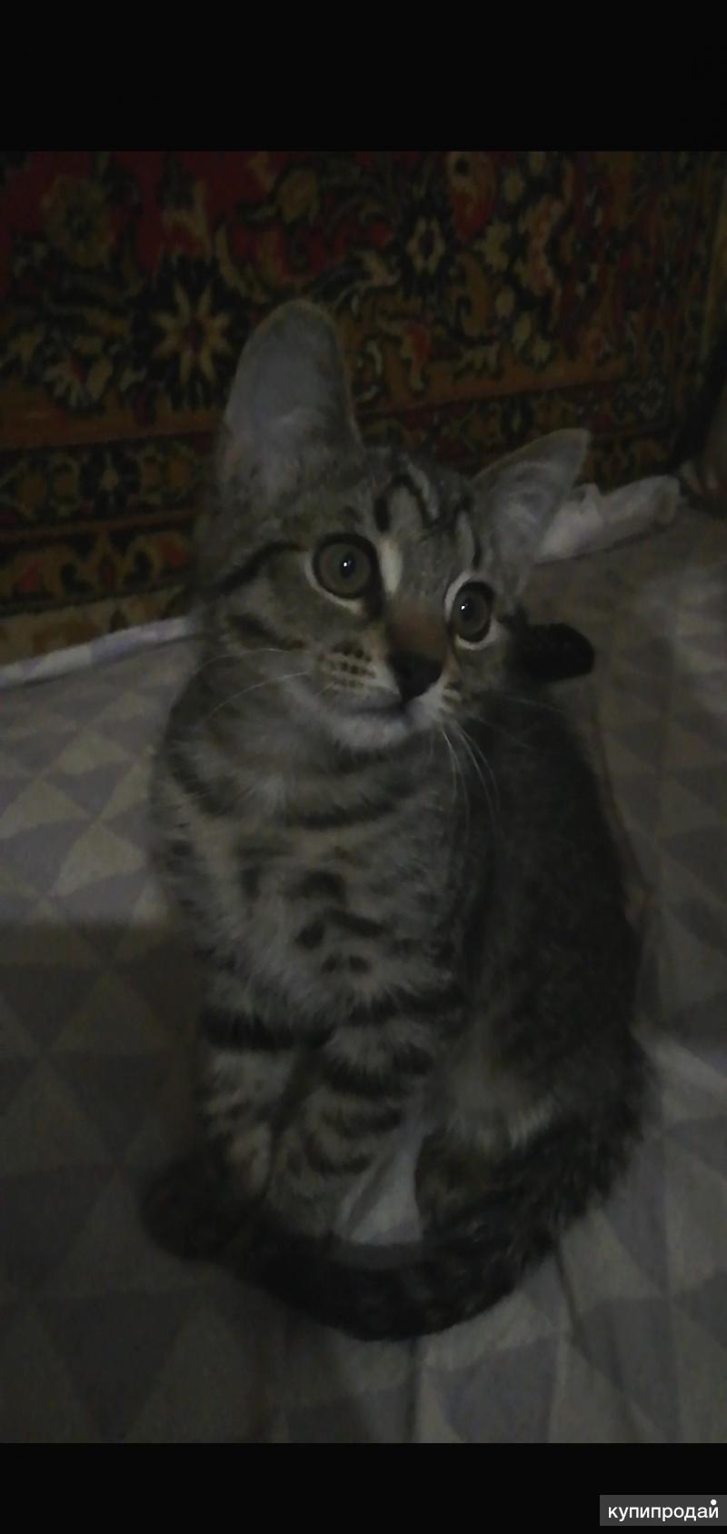 Кошечка Мила, 2 месяца