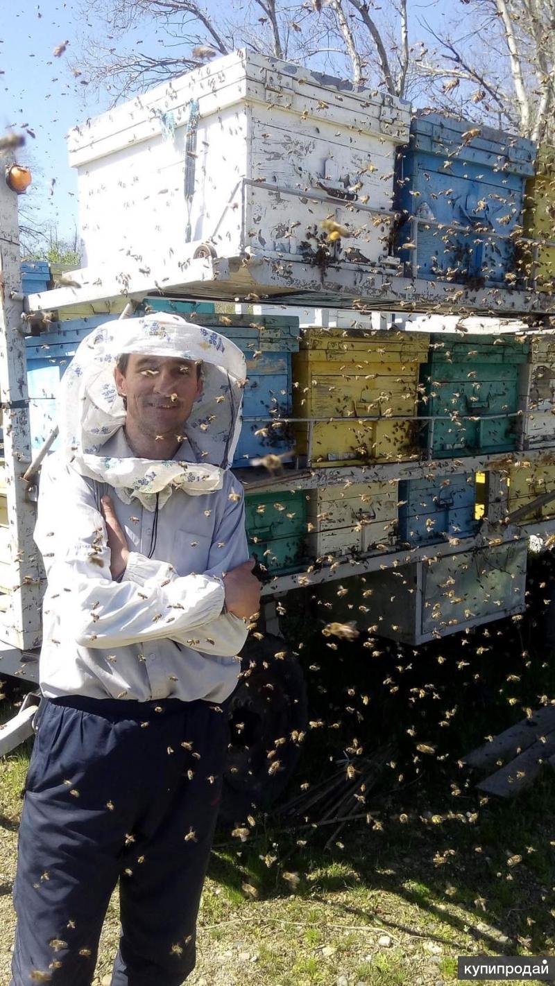 принимаем заказы на пакеты пчел