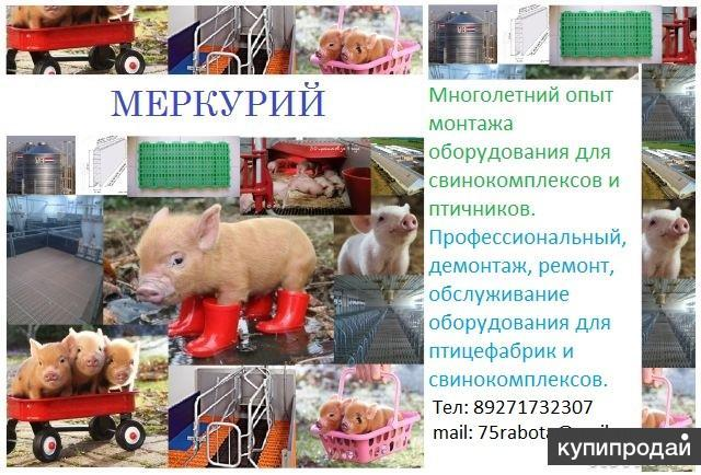 Монтаж оборудования для свинокомплексов и птичнико