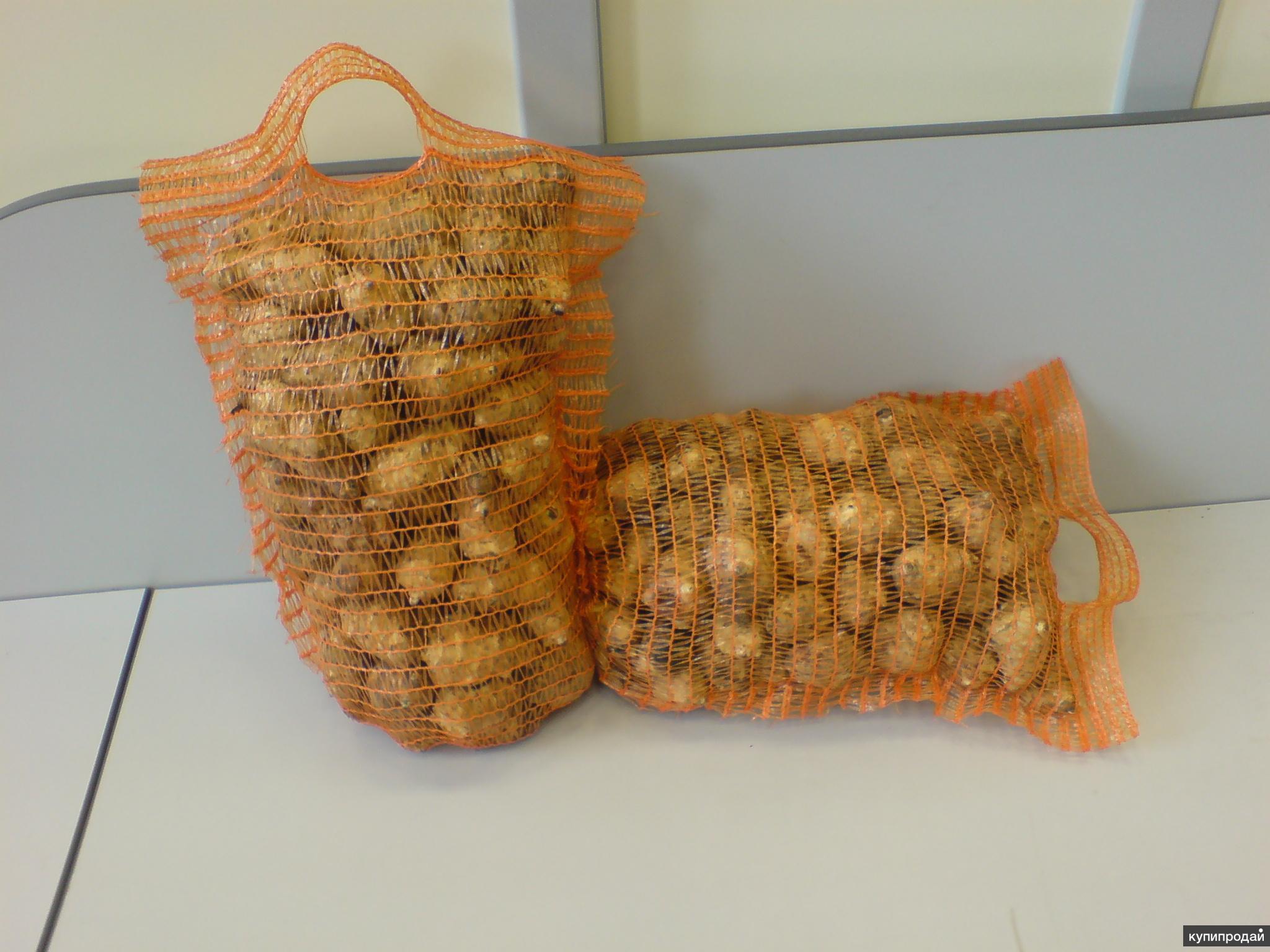 Клубни топинамбура (земляная груша)