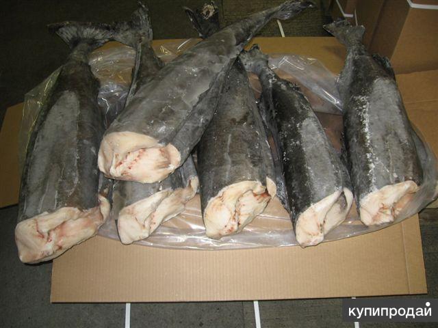 Предлагаем угольную рыбу/черную треску