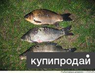 сежая рыба